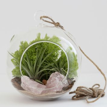 Large Rose Quartz Terrarium Kit with Two Air Plants and Chartreuse Moss