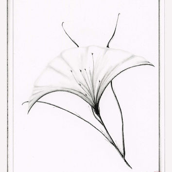 WHITE ELEGANCE:  Art print.  Minimalist floral drawing in pen and ink with black colored pencil, black and white, 8x10 Limited Edition Print