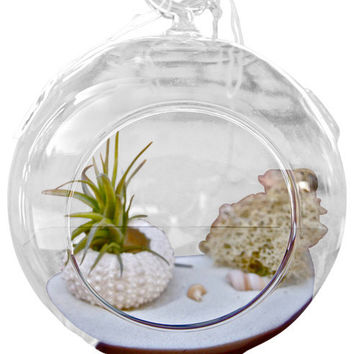 Beachy Single Air Plant Terrarium