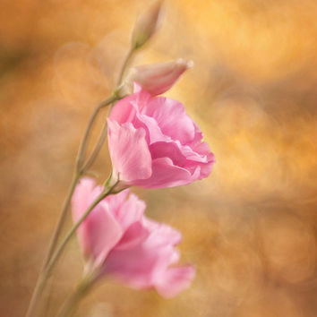 Pink flower photography, eustoma print, pink yellow orange, floral wall art, summer photo print, feminine wall art,  fine art print
