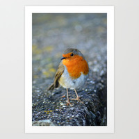 Red Robin Art Print by  Alexia Miles photography