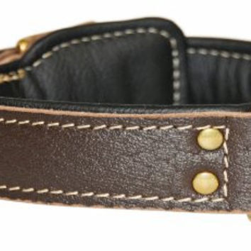 "Dean and Tyler ""ITALIAN TAILOR"", Dog Collar with Black Padding and Brass Hardware - Brown - Size 20-Inch by 1-3/4-Inch - Fits Neck 18-Inch to 22-Inch"