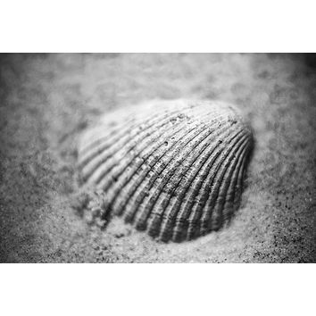 Clam Shell on the Beach Black and White Photograph (A0015813)