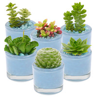 Succulents (Set of 6)
