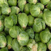 Brussels Sprouts Long Island Vegetable Seeds (Brassica oleracea) 50+Seeds