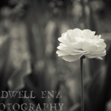 Poppy in Black and White 5x7 Fine Art Print Flower Photography Floral Home Decor Wall Art Nature Photography