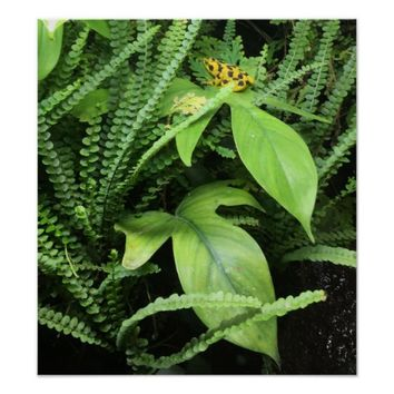 Yellow Black Frog on Plant Poster