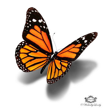 Monarch Butterfly, 3d butterfly tattoo Wickedly  Lovely Skin Art Temporary Tattoo (available in two sizes)