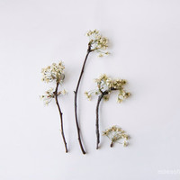 Indoor Garden N8 - 8x10 print. Fine Art Photographic Natural History Print. Minimal style. Natural Home Decor. Indoor garden botanical