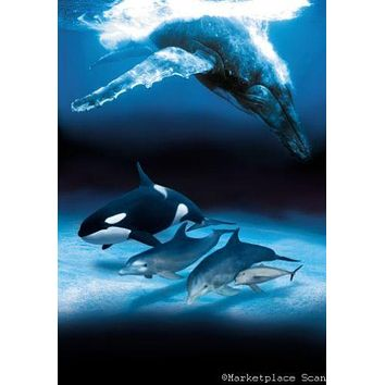 Dolphins And Whales Poster Print art 11 inch x 17 inch