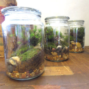 Awesome The Jolly Green Terrarium.... Live Moss Terrarium In A Glass Apothecary Jar