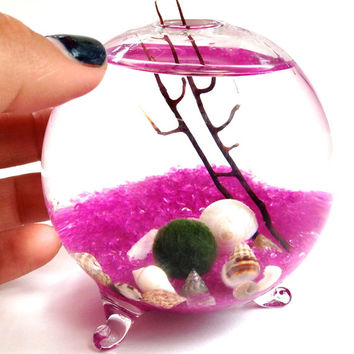 Tiny marimo terrarium//Live japanese moss ball in orb shaped terrarium, free marimo keychain