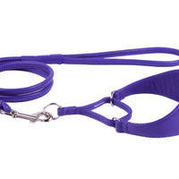 Martingale Greyhound Collar Personalized Dog ID Tag and Leash Set 4 or 6 foot Lead Soft Padded Whippet Lurcher Borzoi