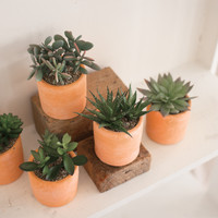 Set of 5 Artificial Succulents with Terracotta Pots