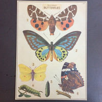 Natural History of Butterflies Print