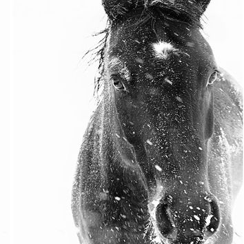 Horse Photograph - black and white horse photography - 8x10 black horse photo, winter horse, snow ice landscape