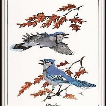 Bird Art Print Blue Jay 8 x 10 Lithograph Wayne Trimm Only 1 in Stock