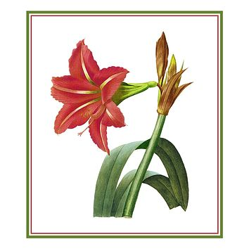 Amaryllis Flowers Inspired by Pierre-Joseph Redoute Counted Cross Stitch Pattern