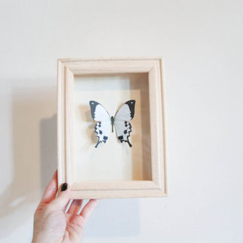 Black & White Faux Butterfly shadow box 5x7