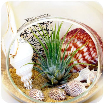 Hanging Air Plant Terrarium Glass Orb : Tropical Beach Tillandsia AirPlant Terrarium Kit Wedding Favor Decor Thank You Fathers Day Gift