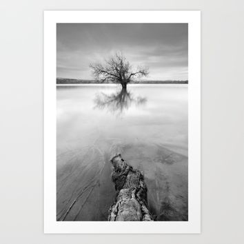"""Roots and trees..."" BW Art Print by Guido Montañés"