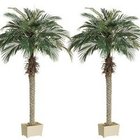 6' Phoenix Palm Tree in Rectangular Plastic Pot (Pack of 2)