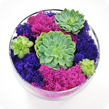 SUCCULENT MOSS terrarium-holiday gift, new years gift, valentines day gift, home decor, housewarming, office plant, indoor planter,terrarium