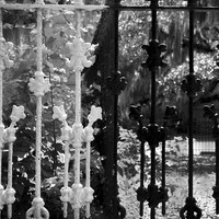 Black and White Photography - Savannah - Southern Gothic Gate