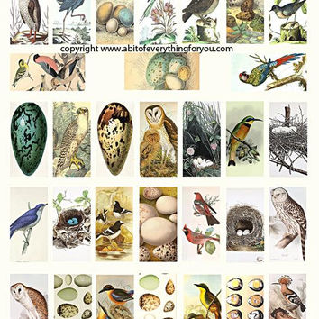 "vintage birds eggs nests clip art digital download domino collage sheet 1"" x 2"" inch graphics images printables for pendants pins magnets"