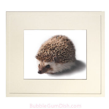 Hedgehog Woodland Nursery Decor Hedgie Poster  Home Decor Wall Art  Wildlife Artwork Nature Decor