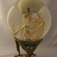 Human Fetal Skeleton in Glass Womb on Stand by Lucyguy on Etsy