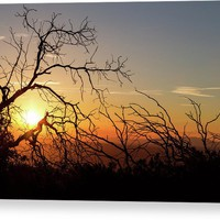 Forest Branches In The Sunset Light Acrylic Print