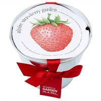 Strawberry Garden In A Pail