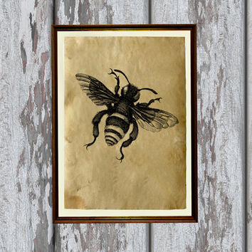 Insect art Bee illustration nature print Old paper home decor 8.3 x 11.7 inches