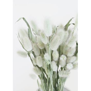Natural Green Dried Bunny Tails