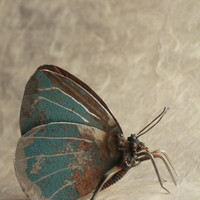 "3"" Holly Blue Butterfly Recycled Welded Scrap Metal Sculpture, Unique Art Work, Reclaimed"