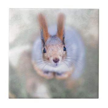 Squirrel looks at you from the bottom up tile