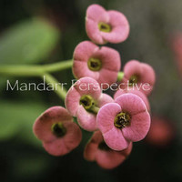 Pink Flowers Photo, Floral Nature Photography Instant Download, Printable Wall Art, Northern Ontario Greenhouse Photo