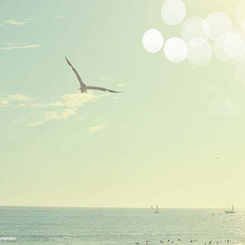 Beach Photography Seagull Sailboat California Los Angeles Santa Monica Venice Fine Art Photo Cottage Decor Nursery