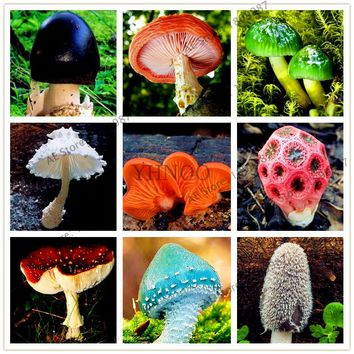 24 kinds Mushroom Seeds Succlent Plant Edible Ornamental Vegetable beautiful delicious Mushroom For home& garden 100pcs/bag