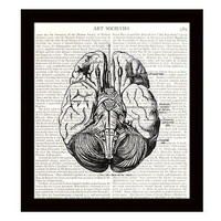 Human Brain 8 x 10 Dictionary Art Print Anatomy Medical Science