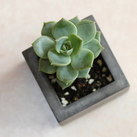 Concrete Cement Planter Container -- succulent pot -- kitchen herb flower window box