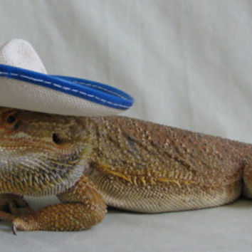 675eb9e94d1 Adorable Hats for your Bearded Dragon from PamperedBeardies on