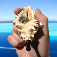 SeaPipe - The Zebra Triton - Natural Smoking Pipe
