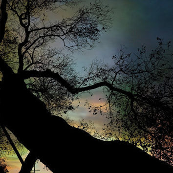 Night Fall by The Tree Pro Photo Print Sale by BRGproductions