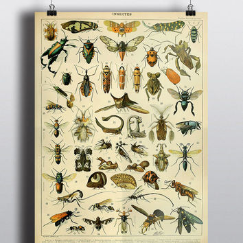 Antique Insects Science Chart Natural Science Bugs Wall Decor Wall Art Scientific Beetle Entomology History Illustration 8x10 11x14 16x20