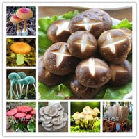 200pcs/bag Mushroom Seeds Funny Succlent Plant Edible Health Vegetable 25 Kinds Mushroom Seeds For Happy Farm Free Shipping