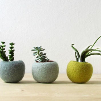 Felt succulent planter / felted pod / Succulent terrarium / Green felt vases / felt bowl / winter decor