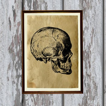 Skull print Anatomy illustration gothic art Antique parchment Antiqued decoration 8.3 x 11.7 inches