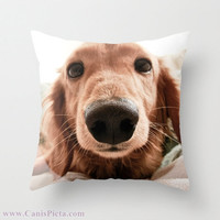 "Dachshund, Dog Photograph 16"" x 16"" Throw Pillow Cover - Photography, Doxie, Dach, Doxies, Weiner, Sausage, Whimsical, Puppy, Bright, Home"